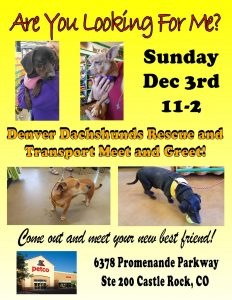 Meet & Greet at Petco (Castle Rock)*Dec 03 2017 *11-2 @ Petco - Castle Rock | Castle Rock | Colorado | United States